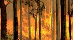 A bushfire burns out of control in Australia. © AFP /Torsten Blackwood