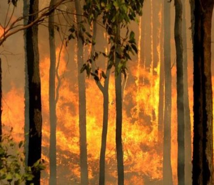A bushfire burns out of control in Australia. © AFP /Torsten Blackwood